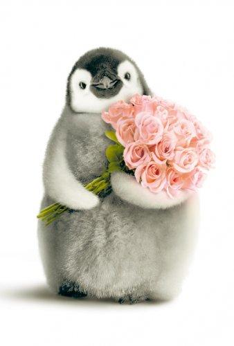 Avanti Karten - Humorkarte Geburtstagskarte Pinguin mit einem Blumenstrauß 94-1044