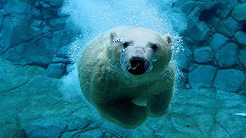 Rompecabezas 1000 Piezas Rompecabezas de Madera Buceo con Osos Polares educativos para niños Juego de Rompecabezas