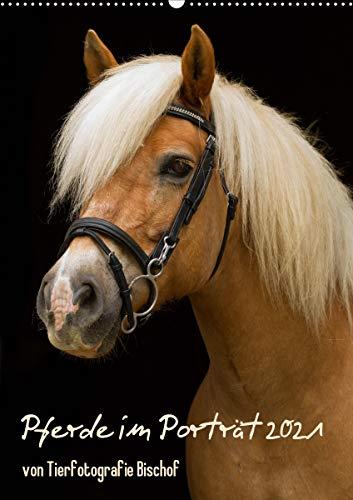 Pferde im Portait (Wandkalender 2021 DIN A2 hoch)