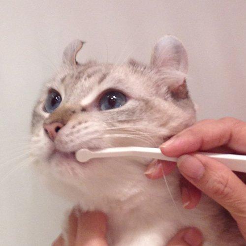 マインドアップ猫口ケア『歯ブラシマイクロヘッド』