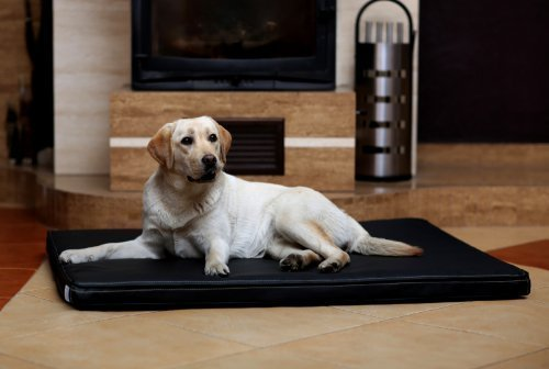 tierlando Carlos Ortho-Medic Orthopädische Hundematte Kunstleder Visko Hundebett Matratze Größe: L - 100x80cm - CA4   Farbe: 03 schwarz