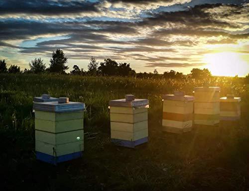 『【北欧産】Pasaka 生はちみつ 300g 天然非加熱 自然保護地区 百花種の蜂蜜 夏の季節』のトップ画像