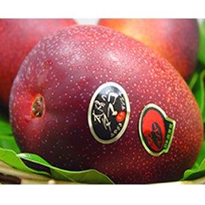 宮崎県産完熟マンゴー 『太陽のタマゴ 』 大玉1個入り (450〜500g) 宮崎マンゴーの最高峰の一つ