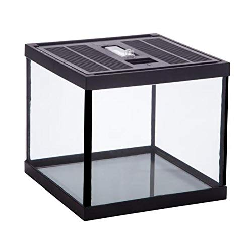 Blentude Reptile Glass Terrarium Natural Comfortable -Glas Crawling Box Turtle Fütterungsbox Container
