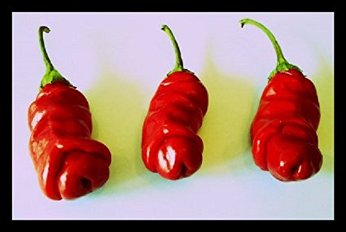 "Penis Chili Rot 10 Samen (Peter-Pepper) \""Der Blickfang im Garten\"" >>>Eignet sich hervoragend als Geschenk<<<"