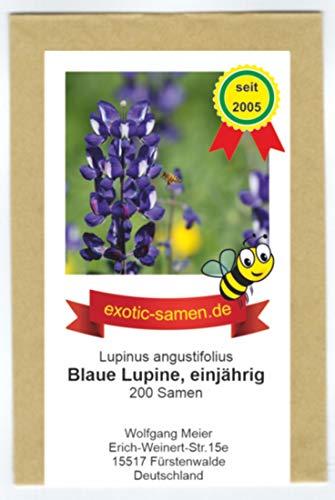 Blaue Lupine - einjährig - Gründünger - Bienenweide - Lupinus angustifolius - 200 Samen