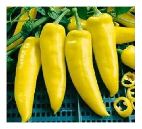 """Semi premiati Seeds ORG221 Chilli """"Hungarian Yellow Wax Hot Organics"""" (Confezione da 100)"""