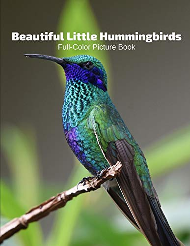 Beautiful Little Hummingbirds Fu...