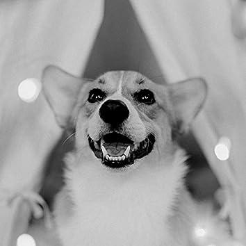 ストレスのたまった犬-パラダイスのような