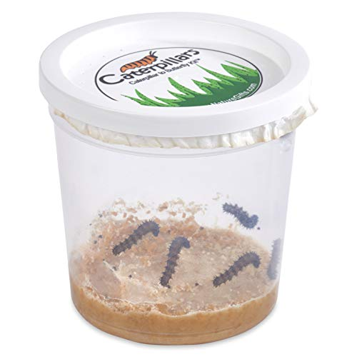 Nature Gift Store 5 Live Caterpillars Shipped Now- Butterfly Kit...