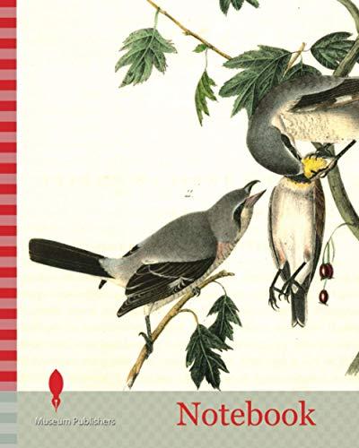 Notebook: Great American Shrike. 1. Male. 2. Female. 3. Young. (Cratagus. Apiifolia.), Audubon, John James, 1785-1851