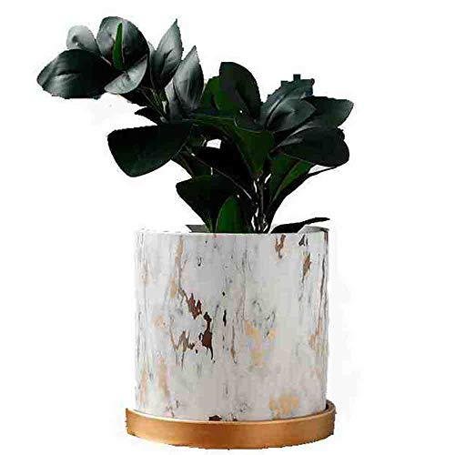 Orchid Pots with Holes 6 Inch Indoor Ceramic Plant Flower Containers Bonsai Pot with Drainage Tray Marble Decorative Gold