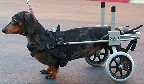 Huggiecart Dog Wheelchair Size 3 R for Small Dog...