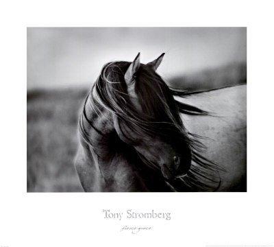 Fierce Grace Tony Stromberg Western Horse Print Poster Animal Art Poster Print by Tony Stromberg, 30x27 by Poster Discount