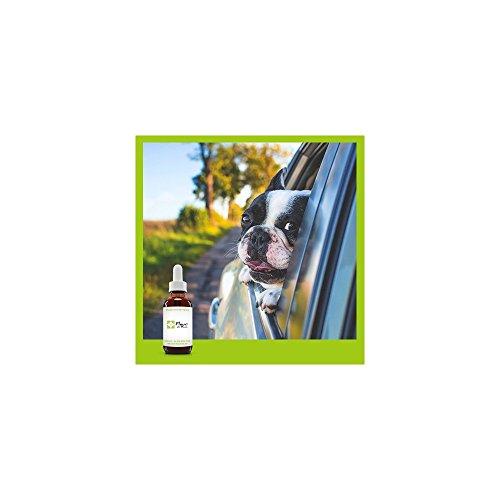 Fleurs de Bach Mal des transports chez lAnimal SANS ALCOOL- Aidez-vous de ce mélange pour partir en vacances sereinement, sans que votre chien, chat pleure, tremble, vomisse.