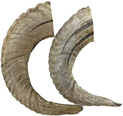 WhietTail Naturals Sheep Ram Horn for Dogs 2 Pack Medium to Large All Natural Dog Chew and Training product image
