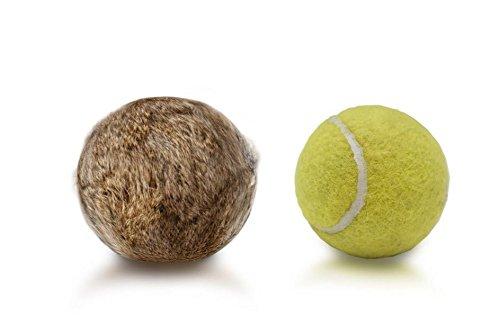 Firedog Fell Tennisball