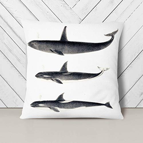 Big Box Art Cushion and Cover - Orca Killer Whales by C.M. Scammon - Single Square Throw Pillow - Soft Faux Suede Material - Stone Rear - 55x55 cm