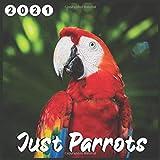 Just Parrots: 2021 wall & Office Calendar 16 Monthe Sep.2020 to Dec.2021