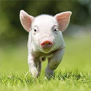 Pigs Calendar - Farm Animals Wall Calendar - Calendars 2019-2020 Wall Calendars - 16 Month Wall Calendar