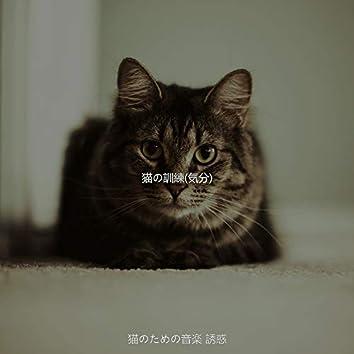 猫の訓練(気分)