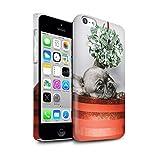 Stuff4 Clipser Brillant Coque de Coque pour Apple iPhone 5C / Chiot Gui Design/Fête de Noël Collection