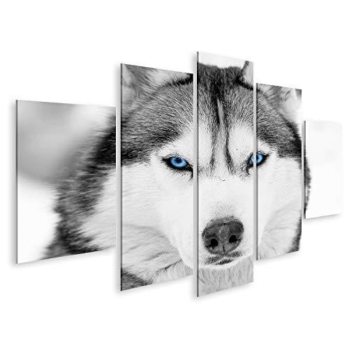 islandburner Bild auf Leinwand Nahaufnahme Porträt eines Husky Hundes mit blauen Augen Bilder Wandbild Poster Leinwandbild