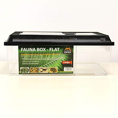 Terra Exotica Fauna Box Flat - Large 45 x 30 x 16,2 cm