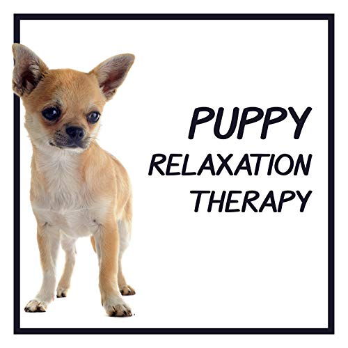 Puppy Relaxation Therapy - Healing Music to Calm Down a Dog, Sleeping Music, Soothing Lullabies for Puppy, Dog Relaxing Music, Head Massage