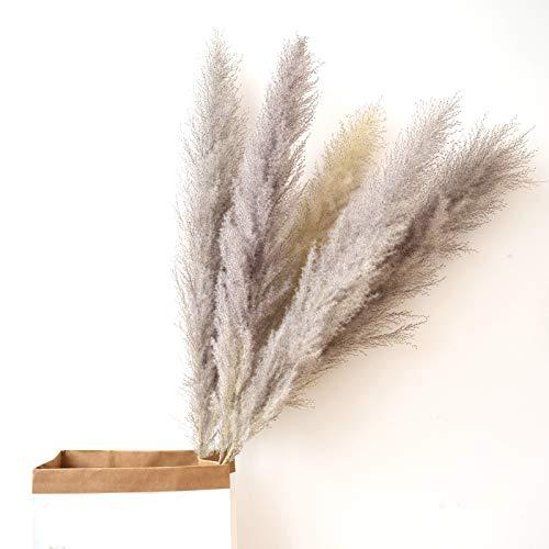 KØZY LIVING Pampasgras - groß, XXL 120 cm Gesamtlänge – natürlich getrocknet, extra fluffig -Trockenblumen als Deko für einen Boho, Vintage Vibe (3 STK, Natur-grau)