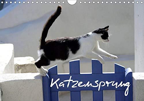 Katzensprung (Wandkalender 2020 DIN A4 quer): Foto-Katzen-Kalender zum Träumen (Geburtstagskalender, 14 Seiten ) (CALVENDO Tiere)