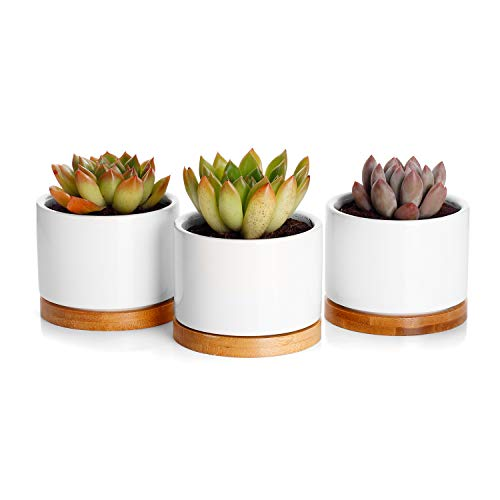 Greenaholics Succulent Plant Pots - 3 Inch White Small Flower Pots for Mini Succulent, with Bamboo Trays, Set of 3