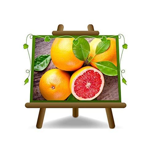 Pamplemousse Citrus - Citrus Paradisi Rosa - Plante Fruitière sur un 22-pot - arbre max 95 cm