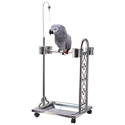 Bird | Dertyped Bird Stand Metal Bird Feeding Station Suitable for Grey Parrot Medium and Large Parrot (Color : Silver, Size : 66X45X100cm), Gym exercise ab workouts - shap2.com