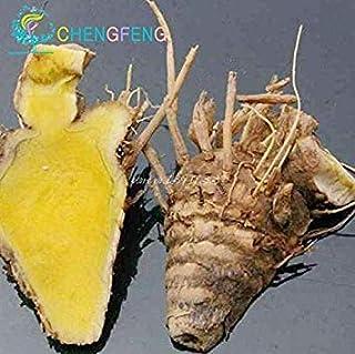 VISA STORE Roots 100 piezas Semillas cúrcuma Curcuma Longa Sp fácil cultivar semillas Adenium obesum semillas Semillas B...