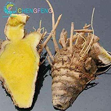 VISA STORE Roots 100 piezas Semillas cúrcuma Curcuma Longa Sp fácil cultivar semillas Adenium obesum semillas Semillas Bonsai
