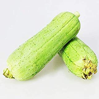 Luffa Seeds 10g Gourd Loofah Long Smooth Sponge Melon Garden Vegetable Organic Chinese Green Fresh Climbing Herb Seeds for Planting Outdoor for Cooking Dish Soup Easy to Grown (Loofah Seeds)