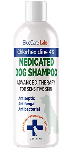 Chlorhexidine 4% Shampoo for Dogs With Itchy Irritated Skin