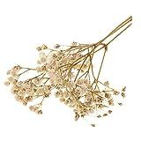 Plantas Prensas Flores Paniculata Secas Reales Flores Artificiales para Marcadores - 6 Colores Opcionales - Blanco