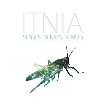 Senses Senses Senses