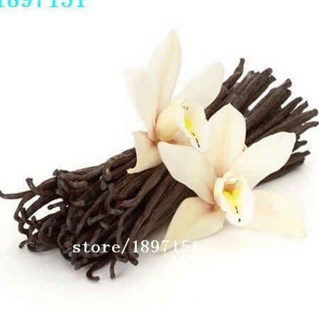 vente Big 100seeds / sac Tubéreuse graines de fleurs des plantes en pot sécheresse arôme agréable de graines graines de vanille de fleurs 20