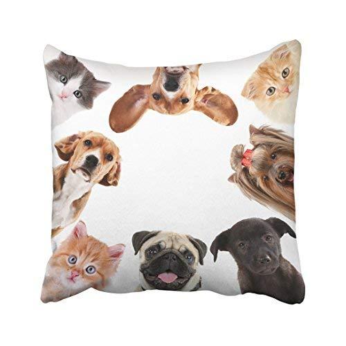 Funda de almohada decorativa para el hogar, 20 x 20 cm, diseño de cachorros rojos de lindos mascotas, color blanco, con diseño de gatitos adoptados para perros y gatos, fundas de cojín de 50 x 50 cm, cuadradas decorativas para sofá, accesorio para el hogar