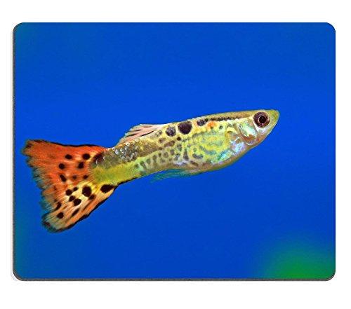 Luxlady Gaming Mousepad IMAGE ID: 36305892 De man van de guppy close-up drijft in een aquarium