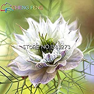 Seeds -New Arrl!!!100pcs Top Quality Love-in-a-Mist Seeds Four Seasons Bonsai Indoor&Outdoor