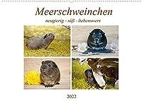 MEERSCHWEINCHEN neugierig - suess - liebenswert (Wandkalender 2022 DIN A2 quer): Glatthaar-Meerschweinchen (Monatskalender, 14 Seiten )