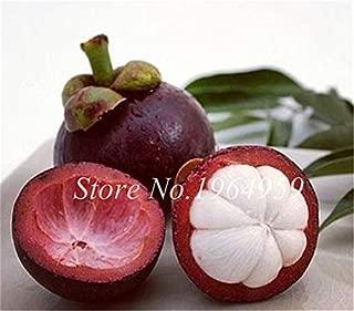 AlyBnd 20 Pcs Mangosteen Bonsai Seeds, Nutrient-Rich Queen of Tropical Fruits, So Delicious Fruit Seeds DIY for Home Garden Plants