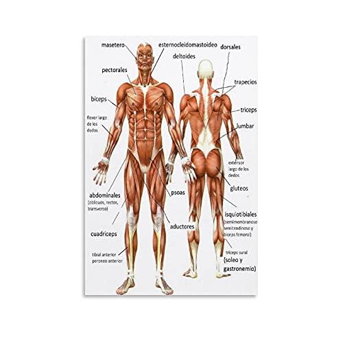 KFMD - Poster con anatomia del corpo umano, poster su tela con anatomia muscolare e stampa artistica da parete, 30 x 45 cm