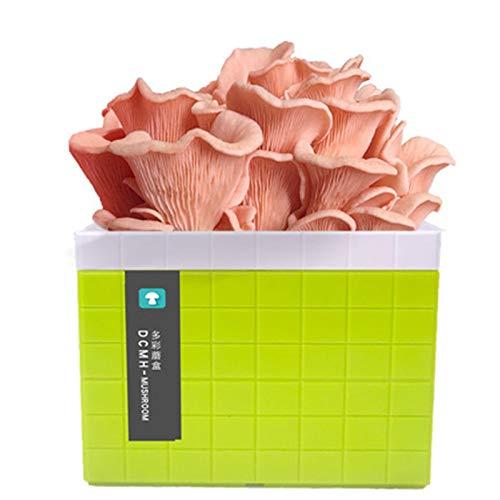 Rowe Mycelium Seas Semillas Semillas Kit de Inicio, ostra orgánica Spore Spore Mycelium Plug Spewn, Kits de Cultivo de Vegetales Interiores (Color : Green)