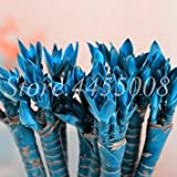 Grande promozione! 40 pc/Sacchetto Fresco Coperta di Lucky Bamboo Bonsai Casa Good Luck Bamboo Pot 100% Vera Pianta in Vaso per la casa Giardino: 4