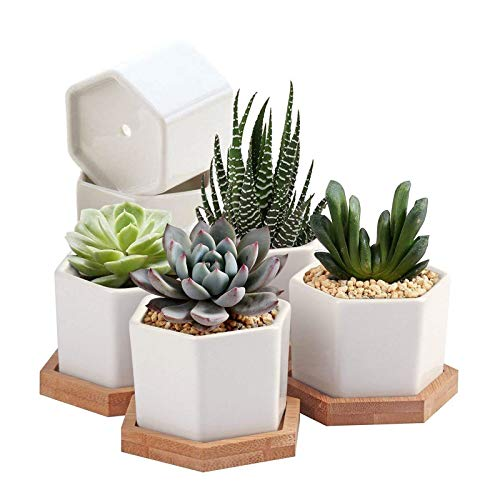 Succulent Plant Pots, OAMCEG 2.75 inch Mini Succulent Planter, Set of 6 White Ceramic Succulent Cactus Planter Pots with Bamboo Tray (Plants NOT Included)
